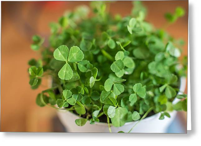 Pot Of Luck Shamrocks St Patricks Day Greeting Card