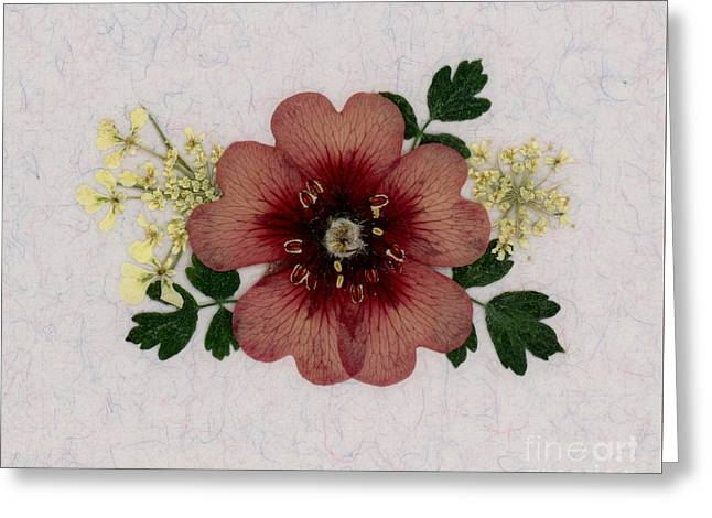 Potentilla And Queen-ann's-lace Pressed Flower Arrangement Greeting Card
