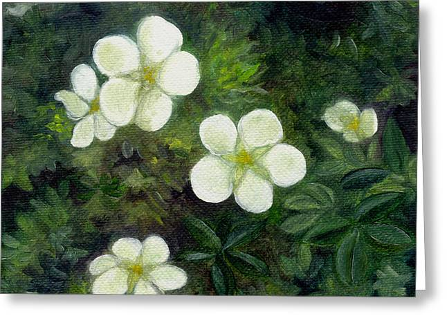 Potentilla Greeting Card