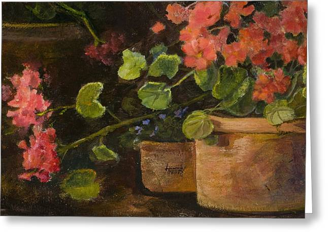 Pots Of Geraniums Greeting Card by Jimmie Trotter