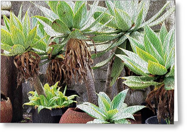 Potted Agave Plants Greeting Card