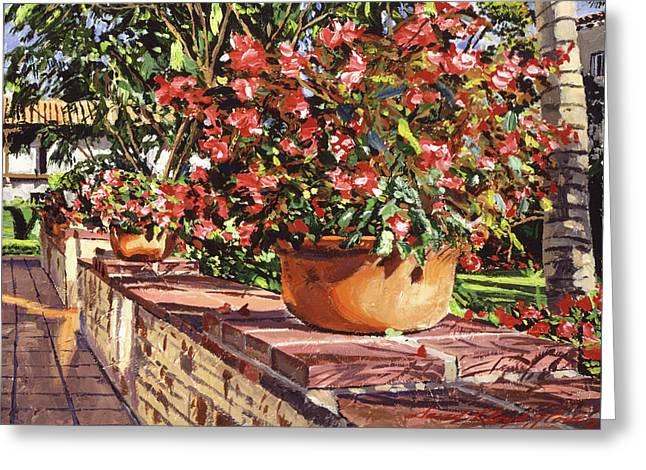 Potted Begonias Santa Barbara Greeting Card