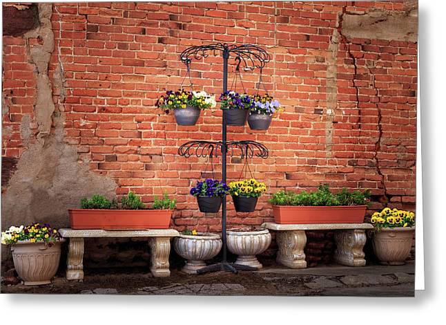 Greeting Card featuring the photograph Potted Plants And A Brick Wall by James Eddy