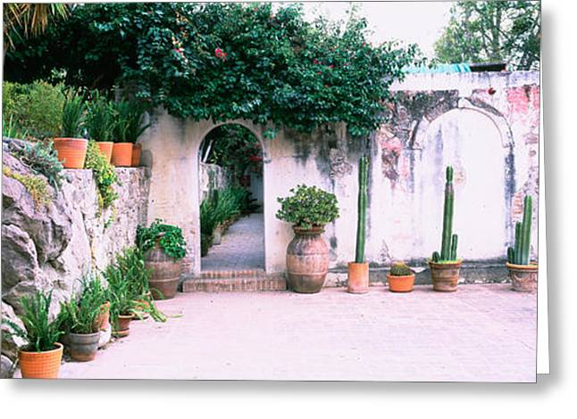 Potted Plants In Courtyard Of A House Greeting Card