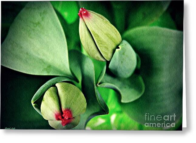 Potted Tulips Still Life   Greeting Card