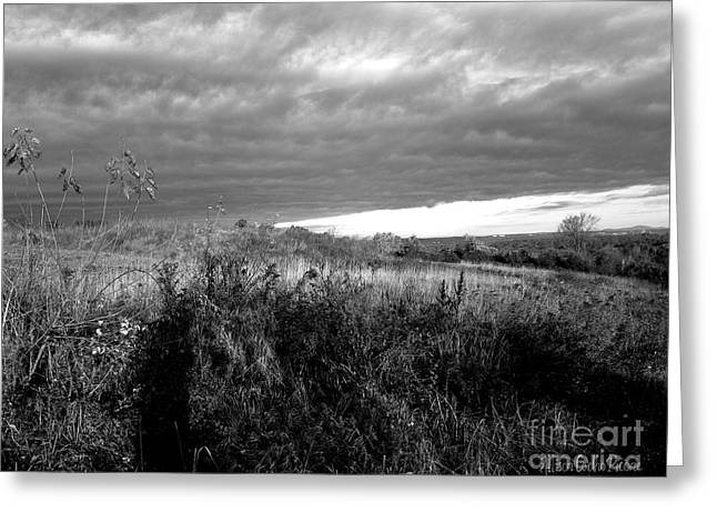 Potter Hill Meadows After Storm Greeting Card