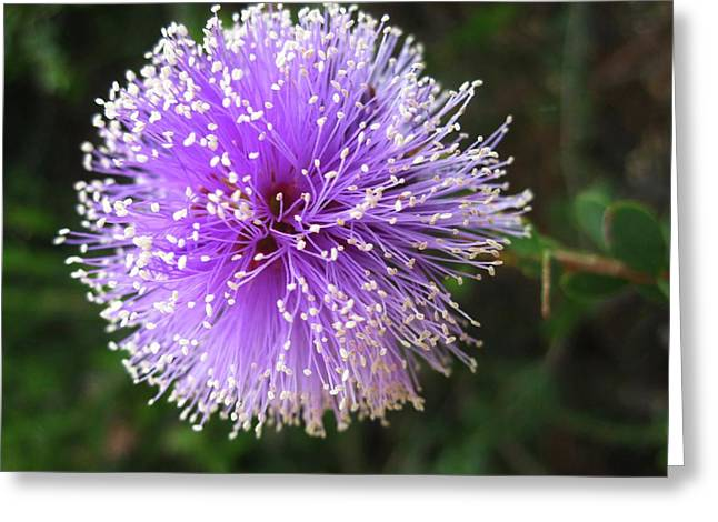 Purple Orb Greeting Card by Mary Ellen Frazee
