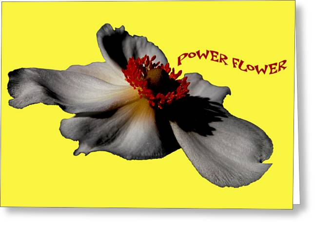 Power Flower Anemone Greeting Card