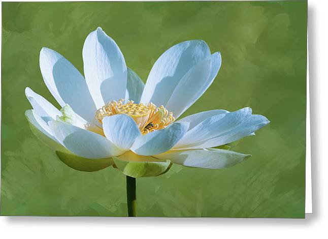 Greeting Card featuring the photograph Power Of A Lotus by Carolyn Dalessandro