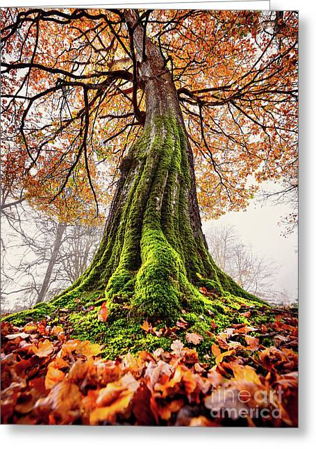 Power Of Roots Greeting Card