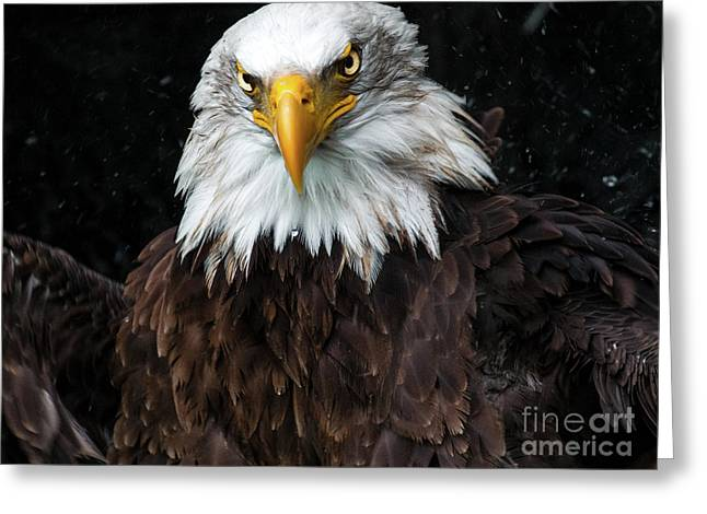 Power Of The Eagle Greeting Card