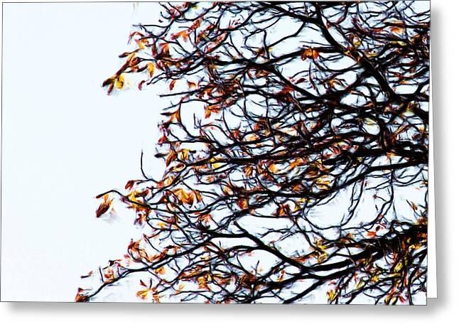 Praha Tangled Tree Greeting Card by Shawn Wallwork
