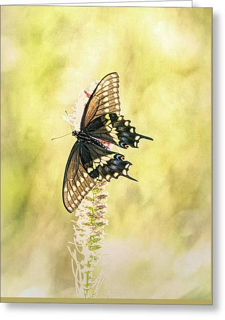 Prairie Butterfly 2 Greeting Card