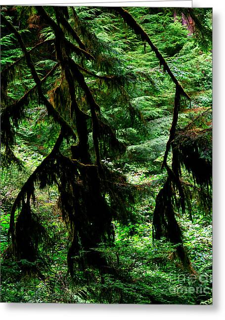 Prairie Creek Redwoods State Park 12 Greeting Card