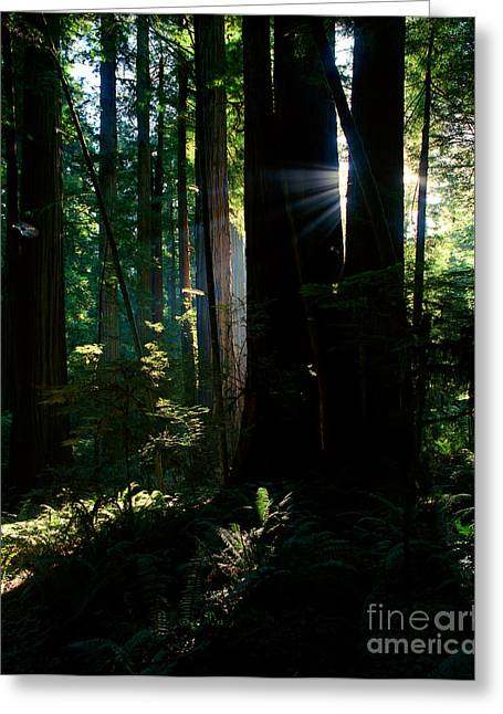 Prairie Creek Redwoods State Park 6 Greeting Card