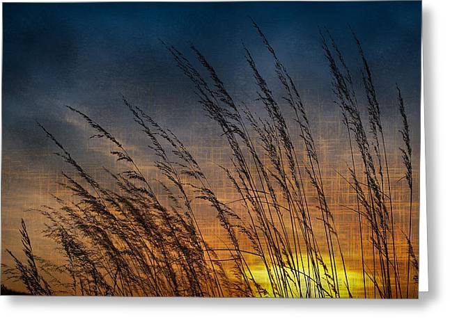 Prairie Grass Sunset Patterns Greeting Card by Steve Gadomski
