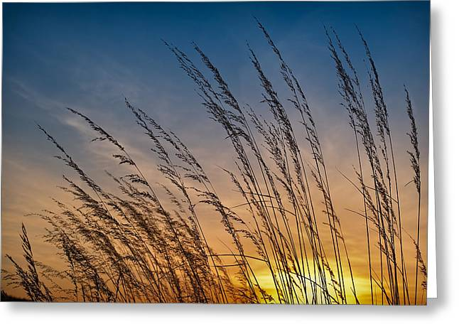 Prairie Grass Sunset Greeting Card by Steve Gadomski