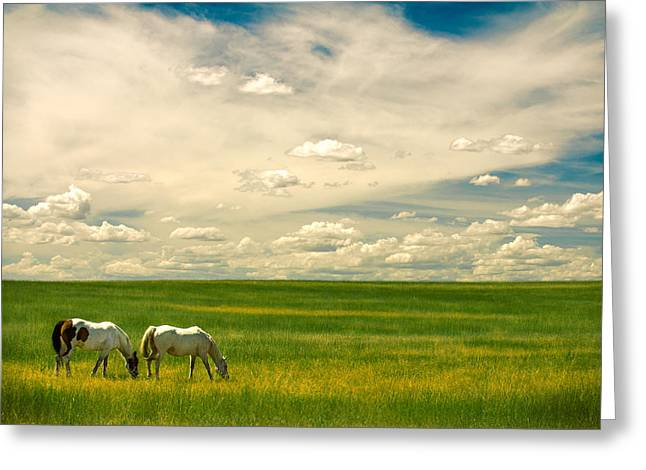 Prairie Horses Greeting Card by Todd Klassy