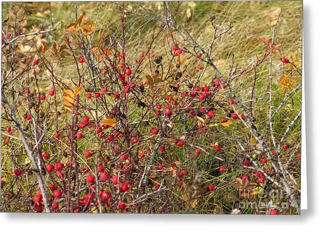 Prairie Rosehips Greeting Card