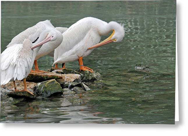 Prayer Of The Pelicans Greeting Card by Teresa Blanton