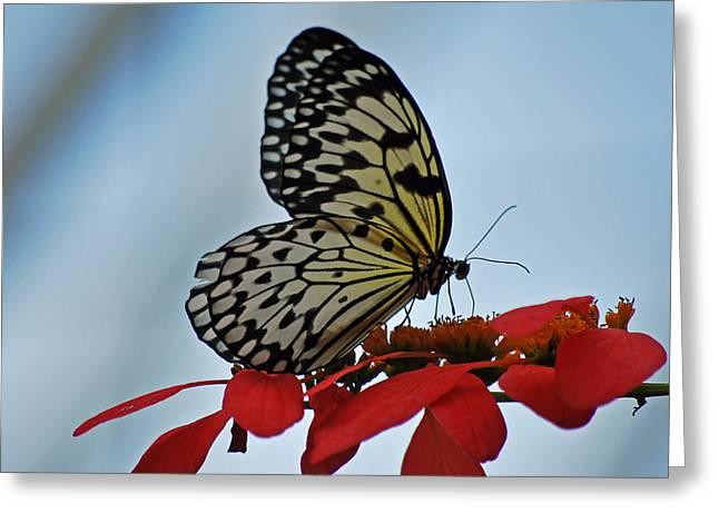 Praying Butterfly Greeting Card by Teresa Blanton