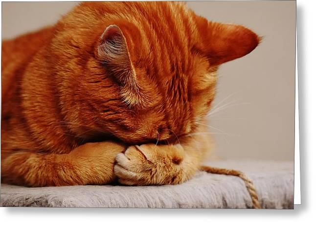 Praying Cat Greeting Card by Billy Soden