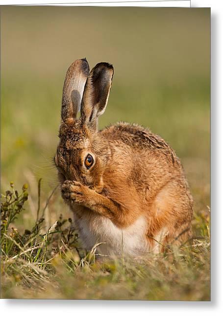 Praying Hare Greeting Card