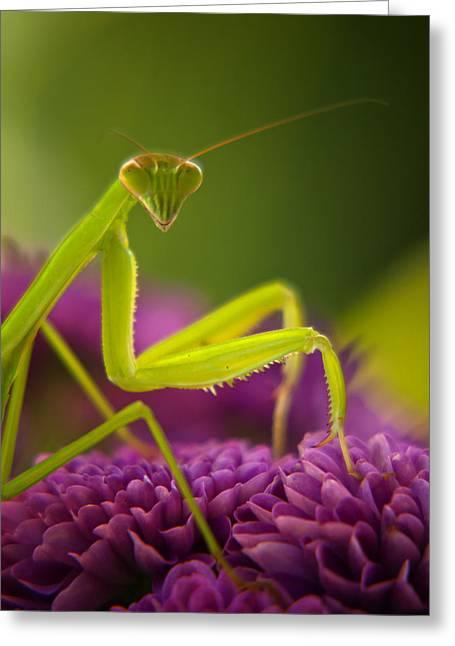Praying Mantis-10851 Greeting Card by Dean Frick