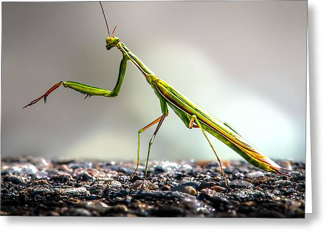 Praying Mantis  Greeting Card by Bob Orsillo