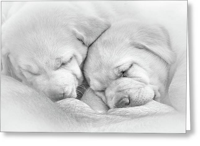 Greeting Card featuring the photograph Precious Lab Puppies Nursing Black And White by Jennie Marie Schell