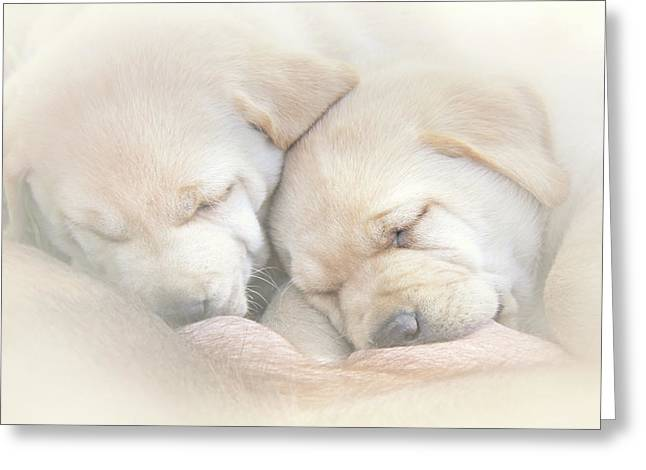 Greeting Card featuring the photograph Precious Lab Puppies Nursing by Jennie Marie Schell