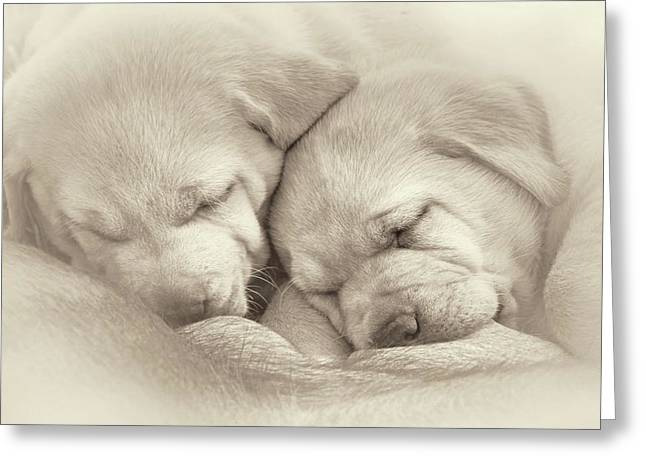Greeting Card featuring the photograph Precious Lab Puppies Nursing Sepia by Jennie Marie Schell