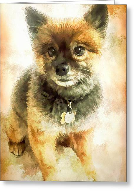 Precious Pomeranian Greeting Card