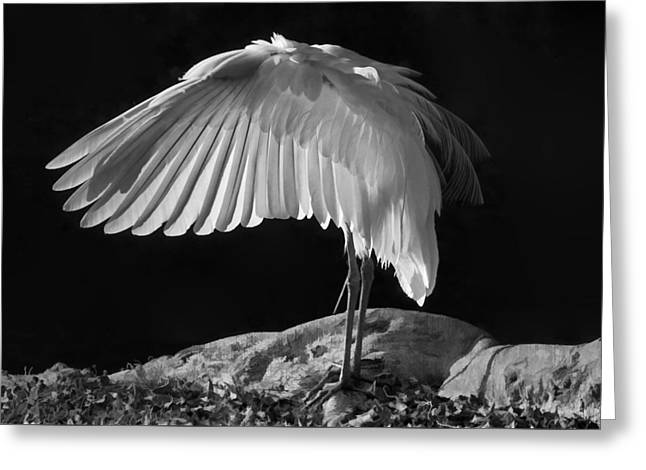 Preening Great Egret By H H Photography Of Florida Greeting Card