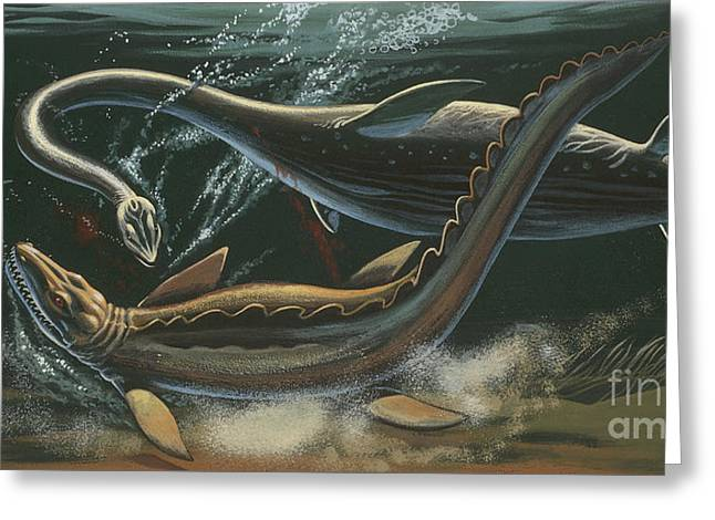 Prehistoric Marine Animals, Underwater View Greeting Card by American School