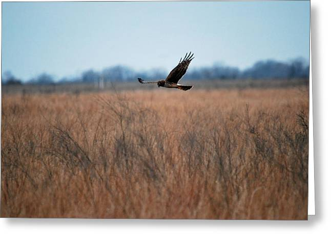 Greeting Card featuring the photograph Prepare For Landing by Teresa Blanton