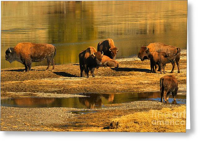Greeting Card featuring the photograph Preparing To Cross The Yellowstone River by Adam Jewell