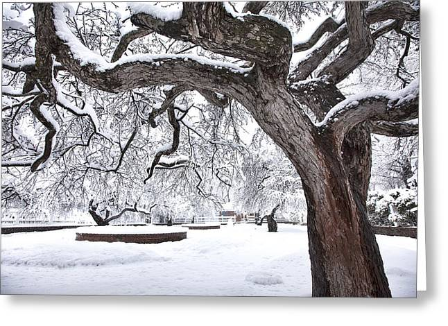 Prescott Park Winter Garden Greeting Card by Eric Gendron