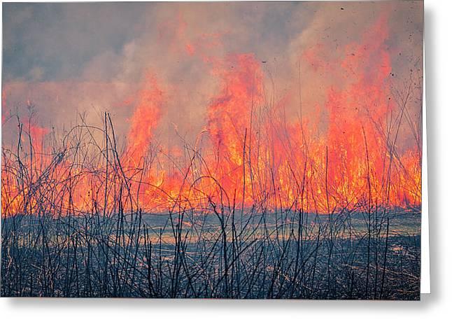 Prescribed Burn 3 - Uw Arboretum - Madison - Wisconsin Greeting Card by Steven Ralser