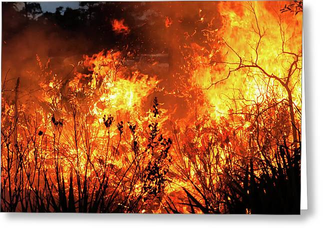 Greeting Card featuring the photograph Prescribed Burn by Arthur Dodd