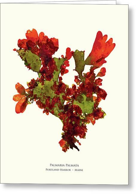 Pressed Seaweed Print, Palmaria Palmata, Portland Harbor, Maine.  #37 Greeting Card