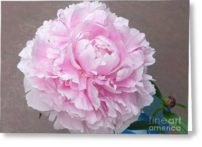 Pretty And Pink Greeting Card by Barb Montanye Meseroll