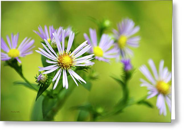 Pretty Aster Flowers Greeting Card by Christina Rollo