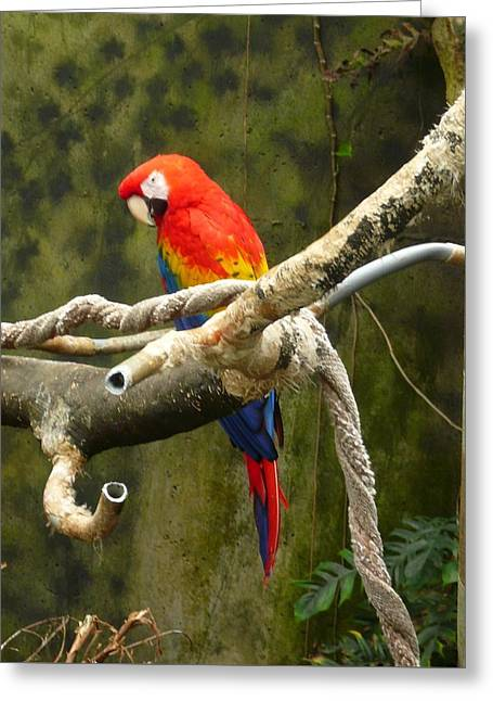Pretty Bird Greeting Card by Connie Young