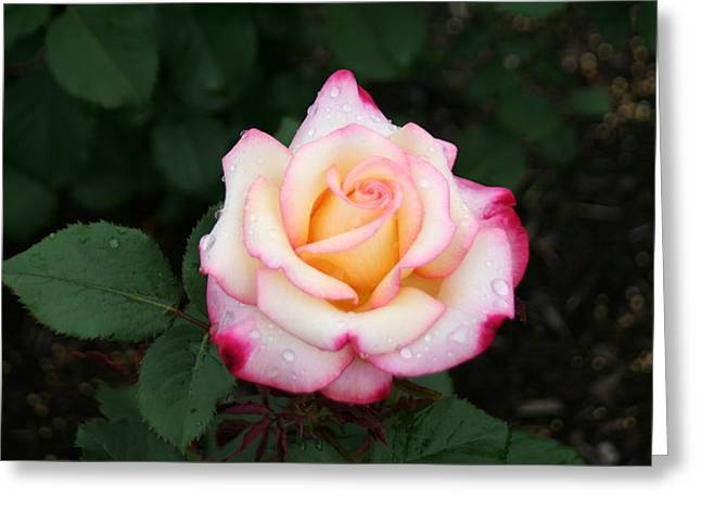 Pretty Bloom Greeting Card by Gerald Mitchell