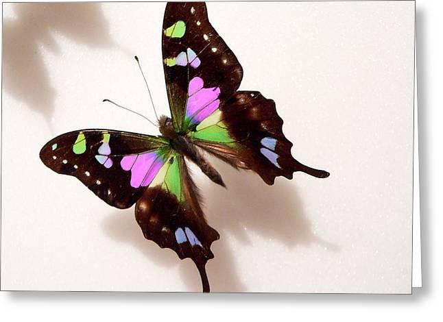 Pretty Butterfly Greeting Card by Rosalie Scanlon