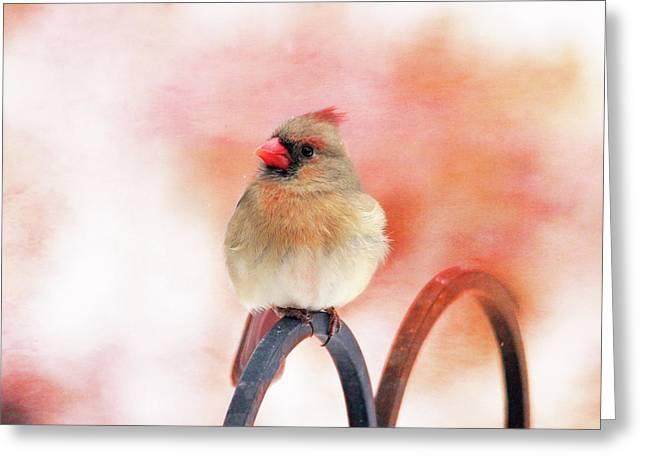 Pretty Cardinal Greeting Card