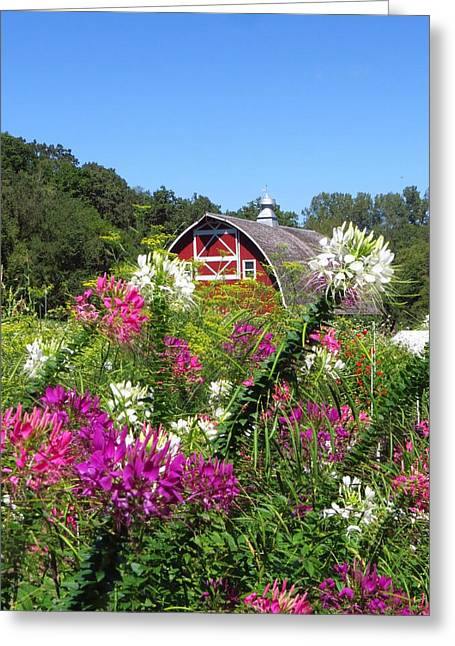 Pretty Cleome  Greeting Card by Lori Frisch