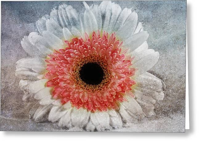 Pretty Gerbera Macro Greeting Card