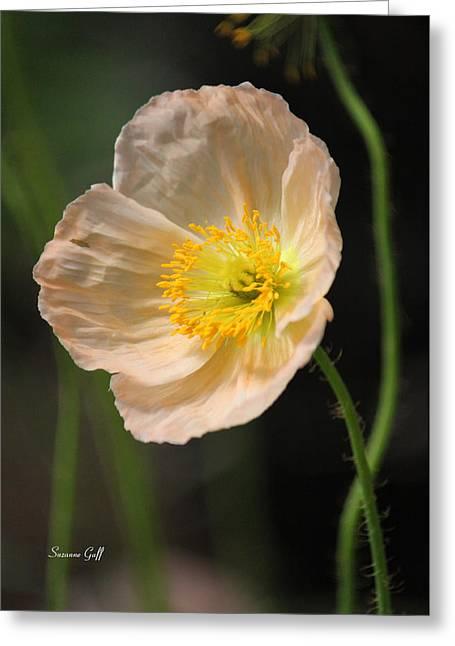 Pretty In Peach Greeting Card by Suzanne Gaff